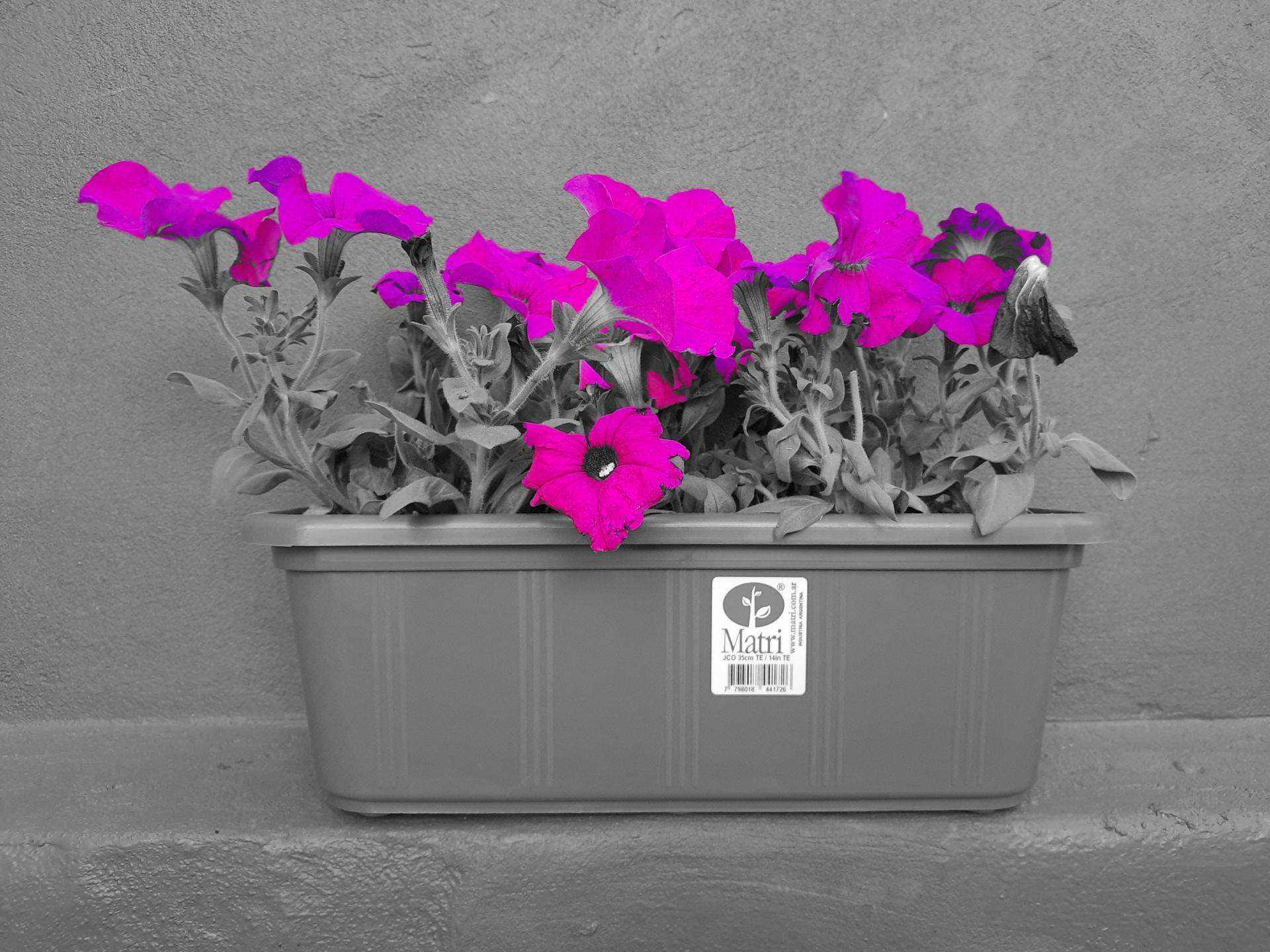 Color Selectivo